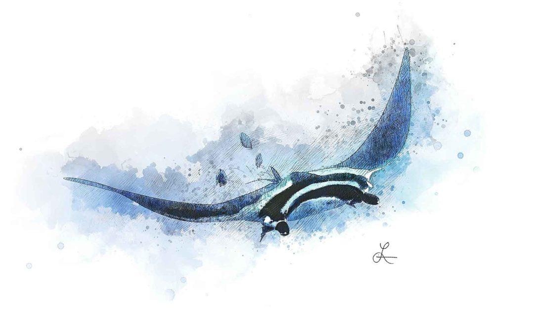 Manta Sketch